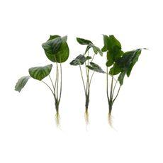 Planta-verde-con-raices---surtidas-1-8429