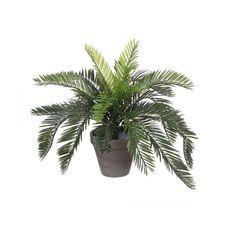 Planta-cycas-en-maceta-color-verde-1-17043
