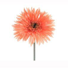 Flor-gerbera-en-tallo-naranja-suave-12X54Cm-1-17101