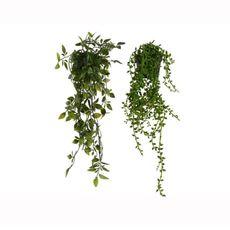 Planta-colgante-en-maceta-color-verde-1-17268