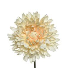 Flor-crisantemo-en-tallo-20x54cm-Crema-1-23349